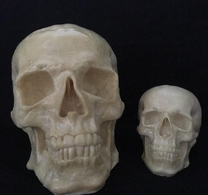 XL Full Skull (Enlarged #5)